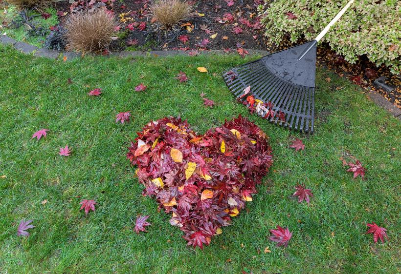Raking Leaves - Have a Spring Ready Backyard in 5 Easy Steps