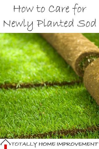 How to Care for Newly Planted Sod