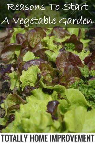 Reasons To Start A Vegetable Garden