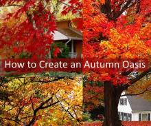 How To Create an Autumn Oasis