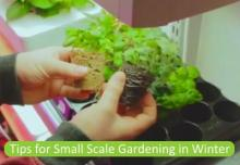 Small scale gardening in Winter